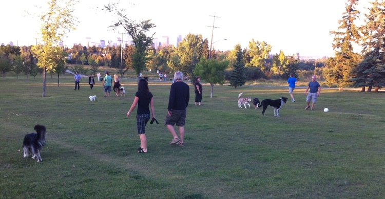 Maybe you love one of our 5,000+ parks? Dog park?