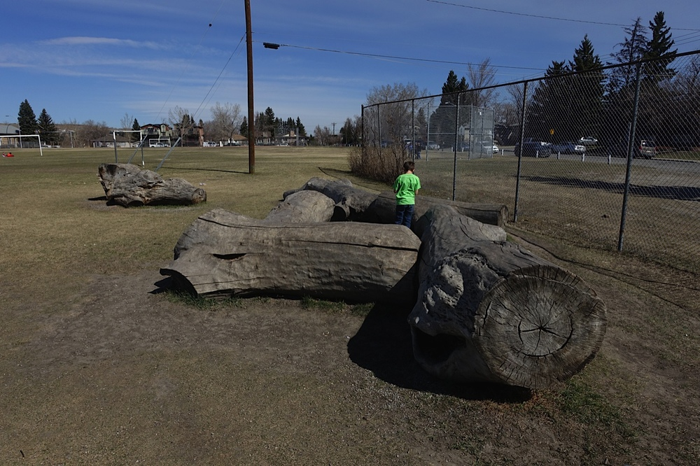 These huge logs are great for climbing on, hiding in or sitting on. Way more fun than a picnic table or a bench.