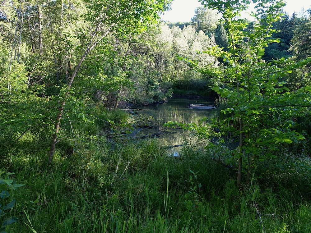 A secluded pond along the south shore of the Bow River across from West Hillhurst/Parkdale has the potential of a sanctuary for someone.