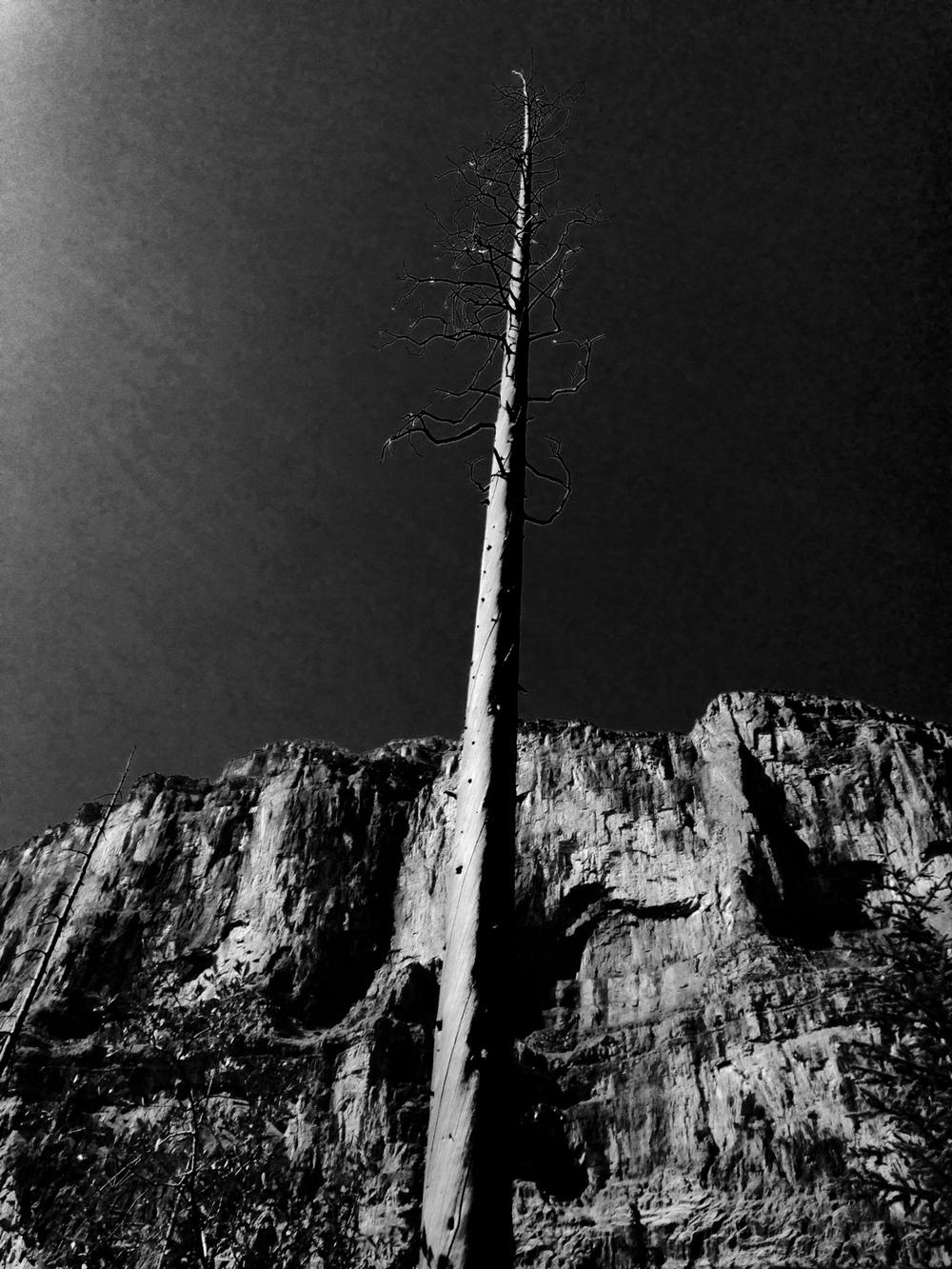 Stanley Glacier tree