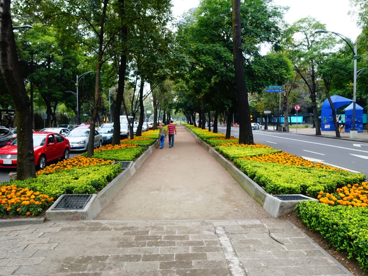 Boulevard road in the middle of  Bosque de Chapultepec.