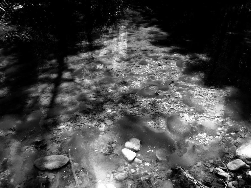 """Serenity"" (Redwood Meadows)"