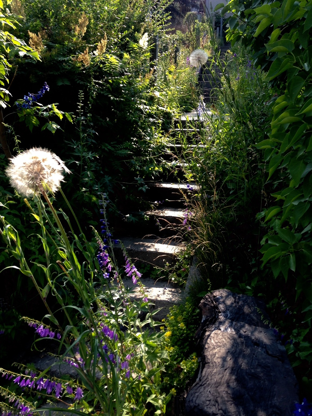 Loved the evening light on the overgrown stairs going up to the front entrance of a home in Calgary's Hounsfield Heights community.