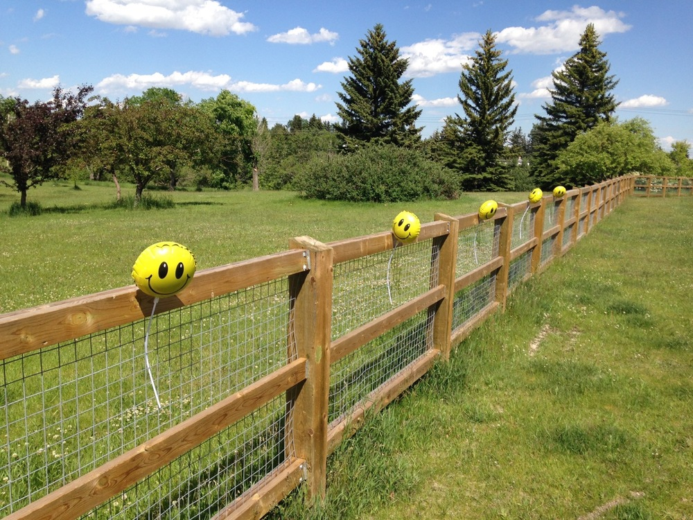Found this happy fence, when taking Rossi for a walk in the River Park dog park.