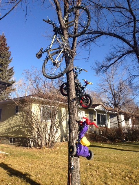 Found these Christmas lights in Briar Hill...never did get to see them on at night.