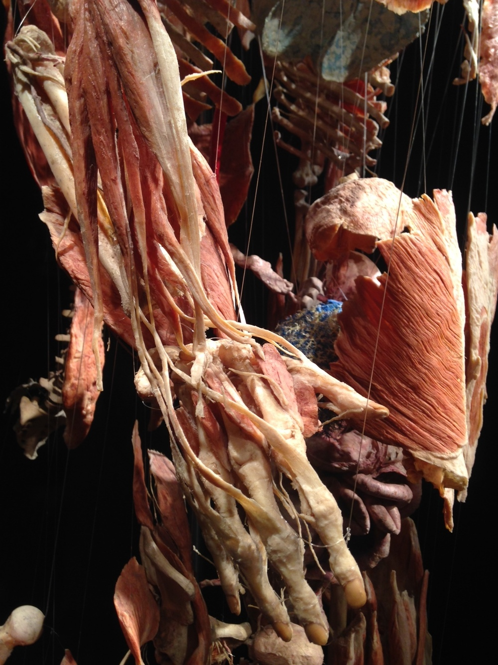 This close up further documents the astounding/mindboggling complexity and fragility of the human body.