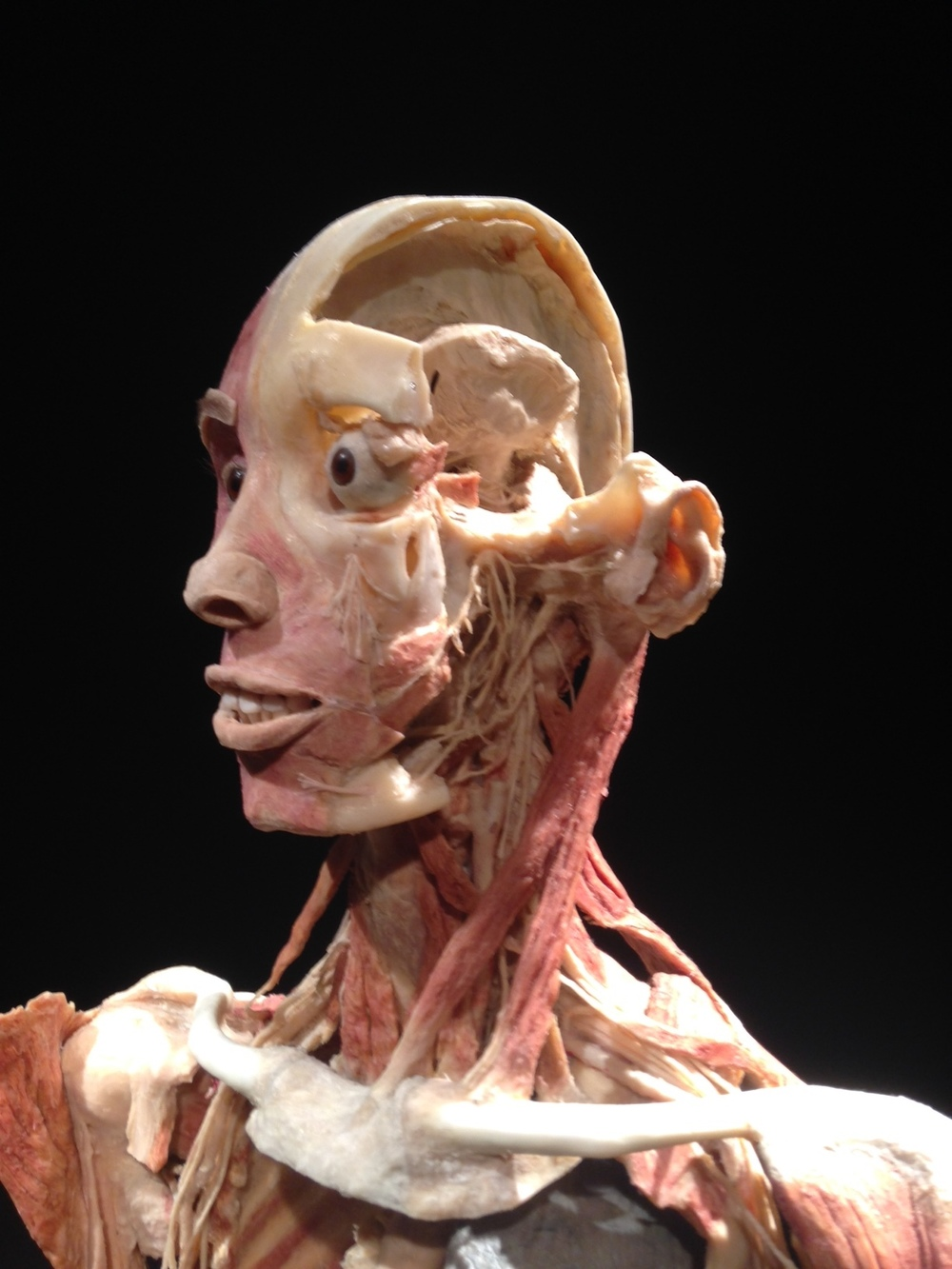 This human head has an eerie stare. It looks like something Salvador Dali might have done.