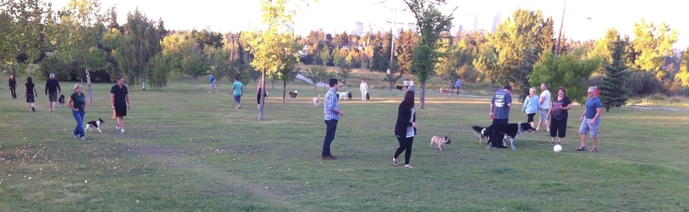 In the summer River Park is full of people and their dogs, enjoying a relaxing stroll along it 1 km rolling terrain.