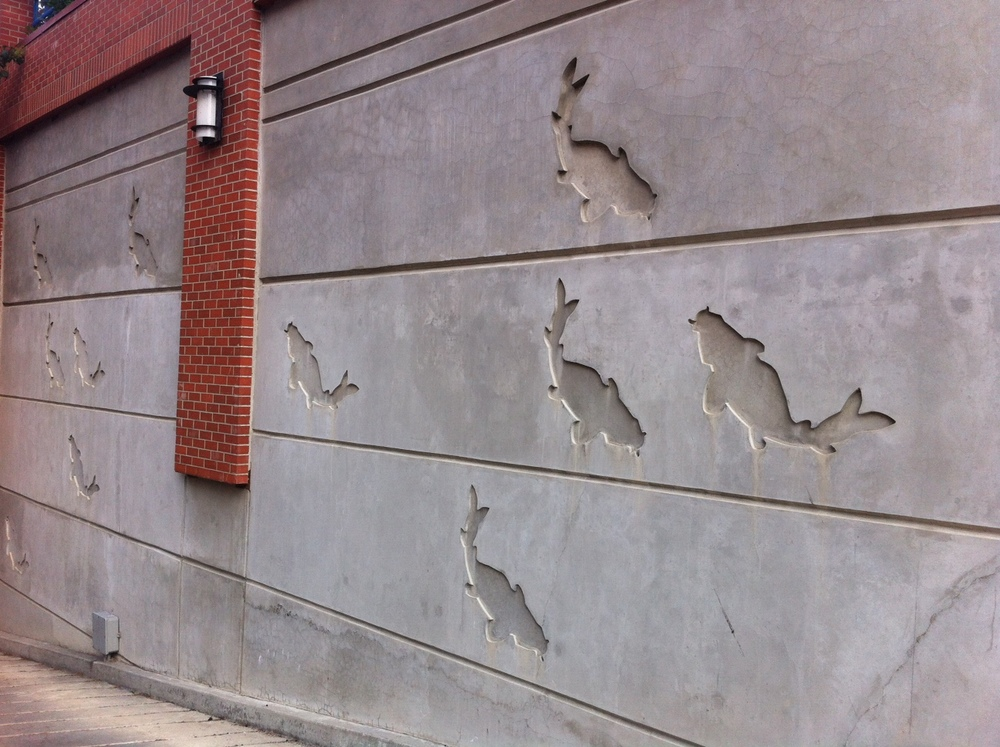 Next to the Bow River, this fish wall is yet another surprise.