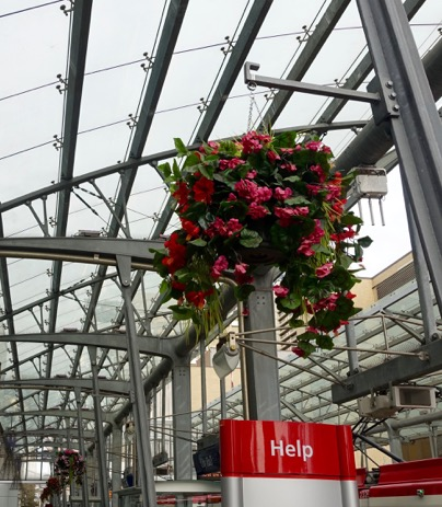 To brighten up the LRT stations hanging plastic flowers have been added to the station, which is very surreal on a cold winter day.