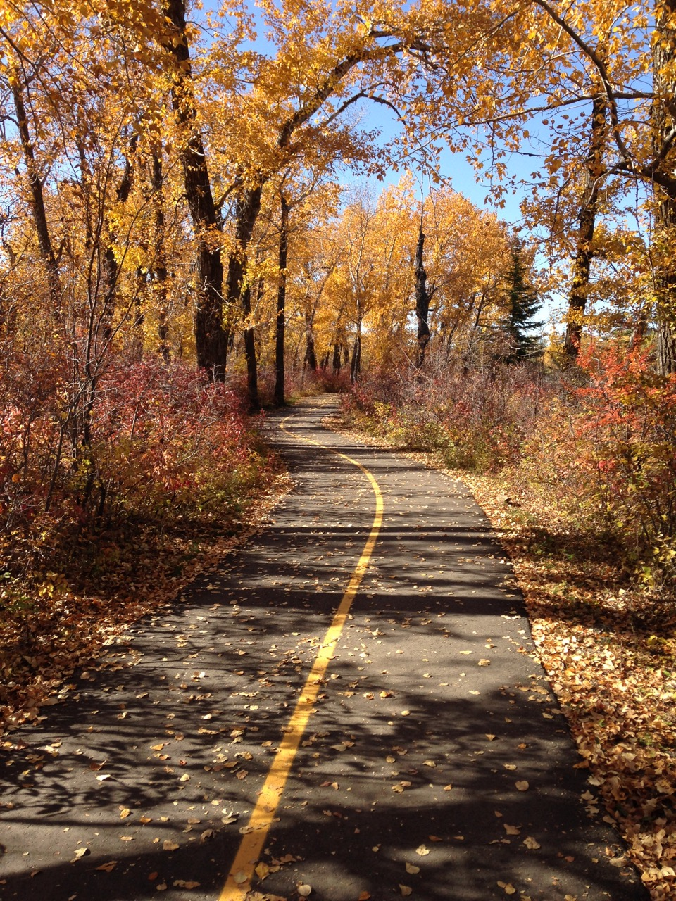 Calgary boast one of the largest urban pathways networks in the world.