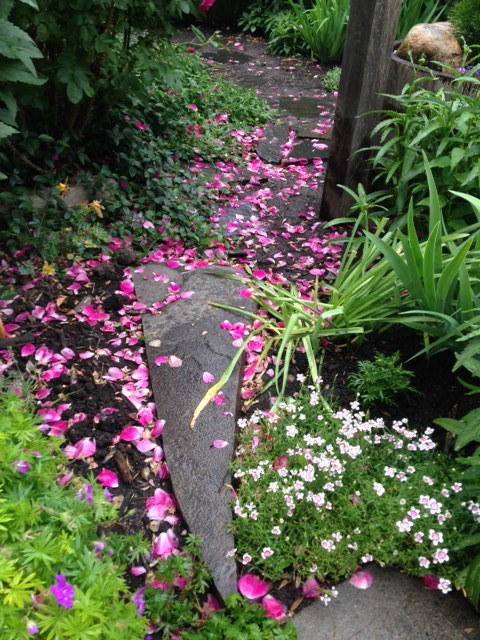 The pathway to our secret garden was littered with rose pedals after a recent rain, create a romantic sense of place.