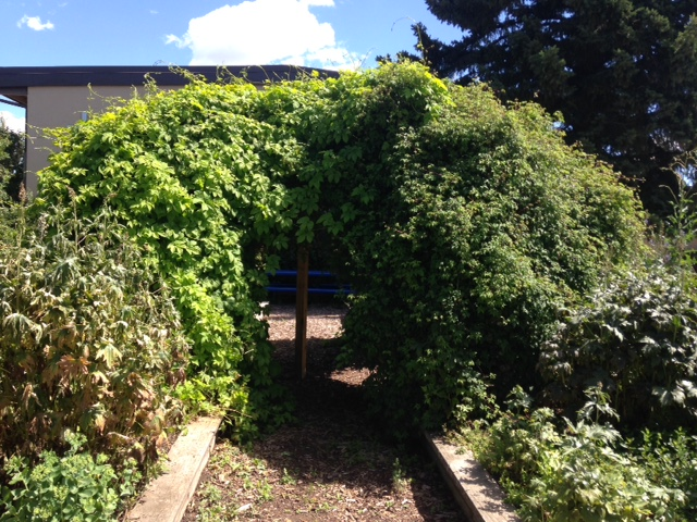 Found this mysterious grotto-like garden at the entrance to the Ecole St. Pius X School at the corner of 23rd Ave and 18th St. NW (technically in Capitol Hill as 18th Street is the dividing line)