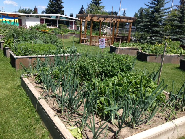The Banff Trail community garden is a more typical community garden in my mind.