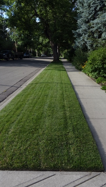 The perfect grass on this boulevard looked almost artificial.