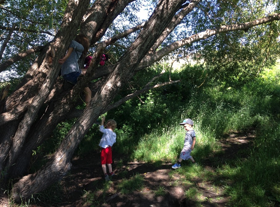 We have great climbing trees, who needs climbing walls?
