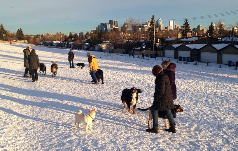 West Hillhurst dog park offers great views of the City's skyline, as well as a chance to chat with friends and neighbours.