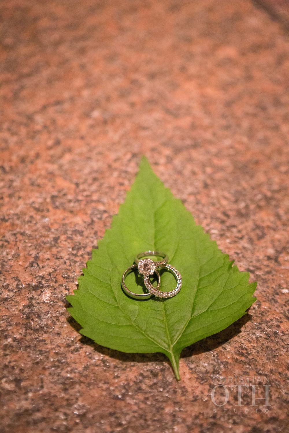 THE RINGS ON A CENTRAL PARK LEAF