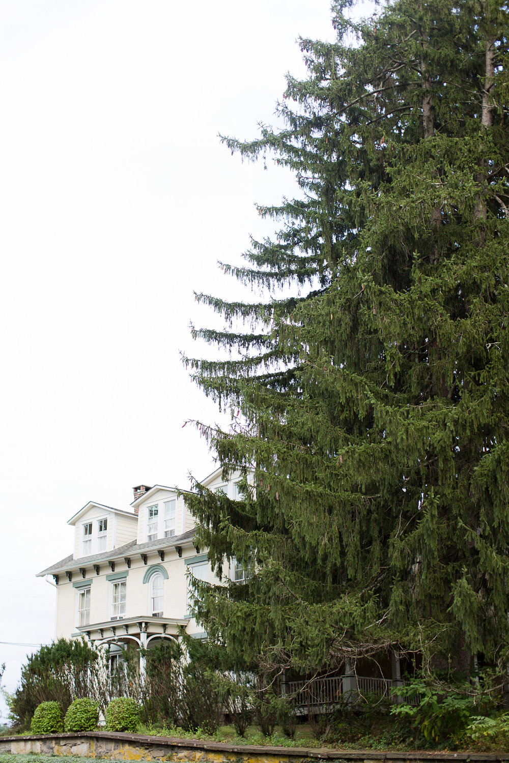 EVERGREEN TOWERING OVER SHEELEY HOUSE