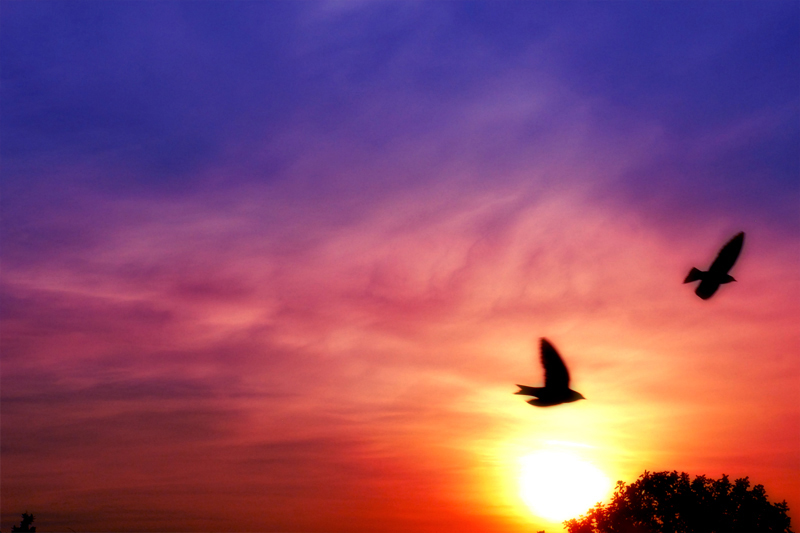 box_birds2.jpg