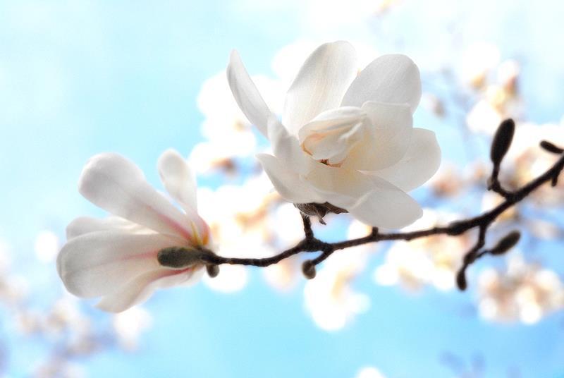 calendar_flower.jpg