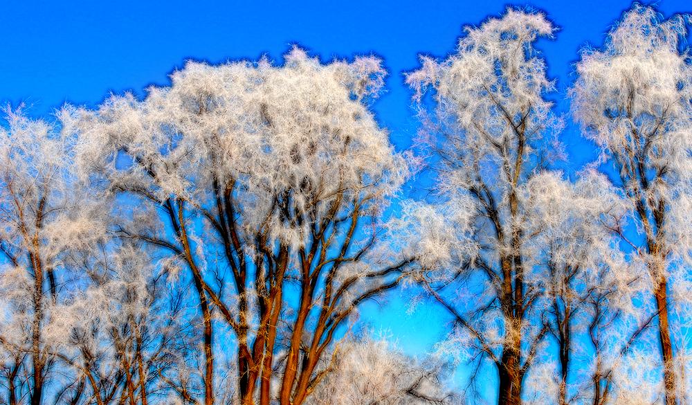 tree_art.jpg