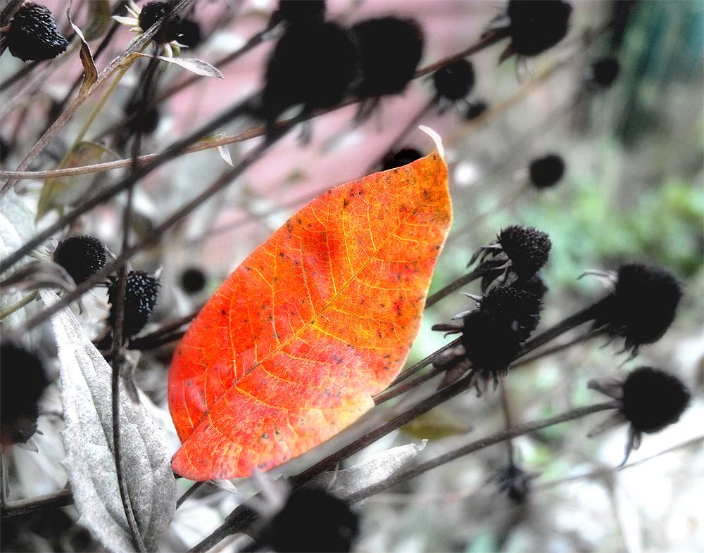 2012_leaf_sm.jpg