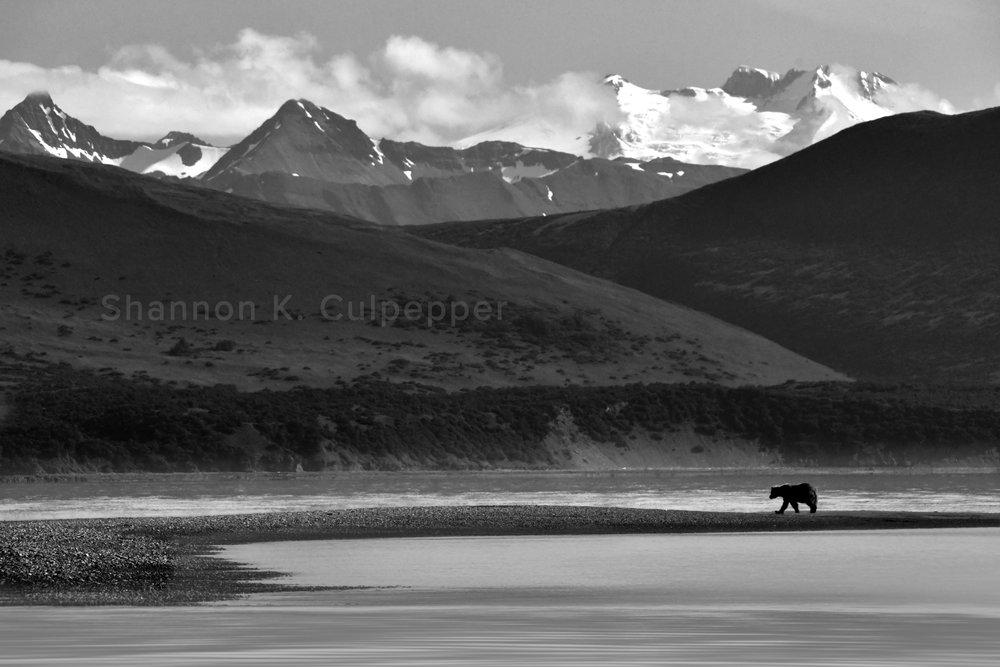 alaska_bear_landscape_shannon.jpg