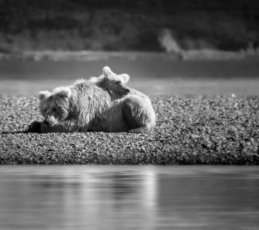 alaska_shannon_bears_coudle_bw_sm.jpg