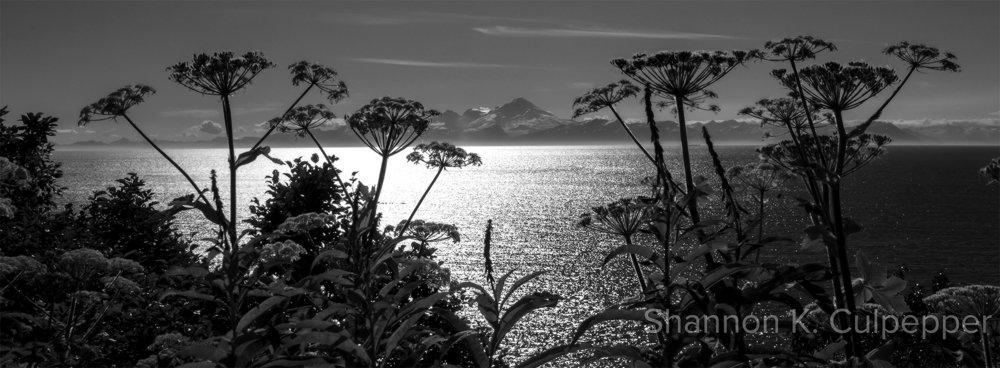 alaska_shannon_landscape_homer1_bw_sm.jpg