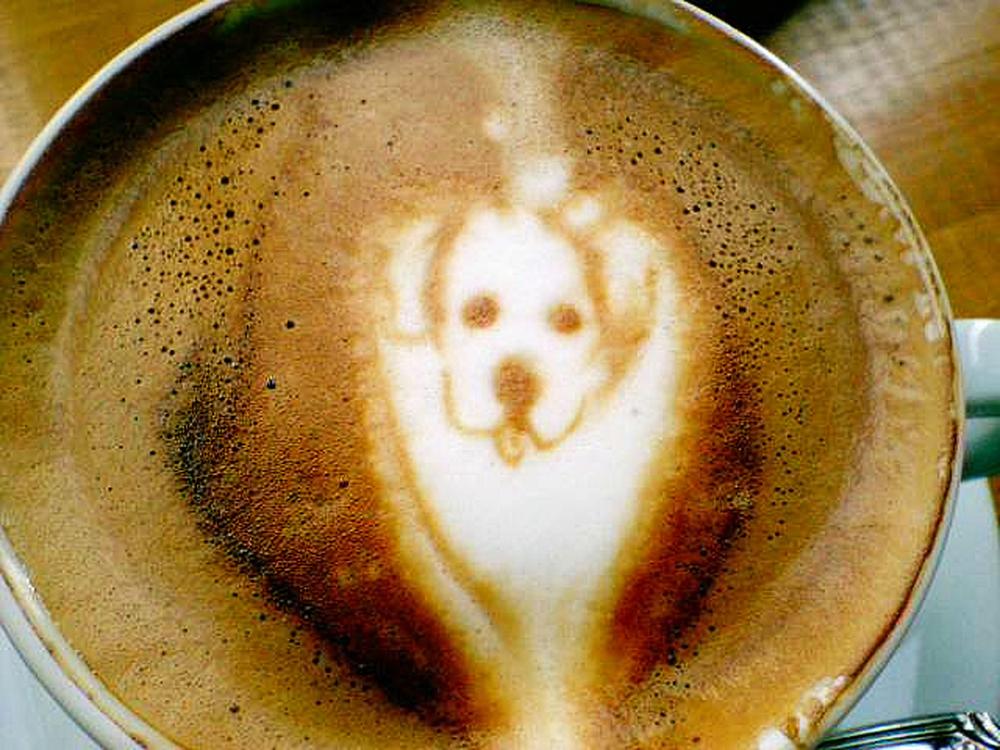 coffee dog sketches 921 flickr copy.jpg