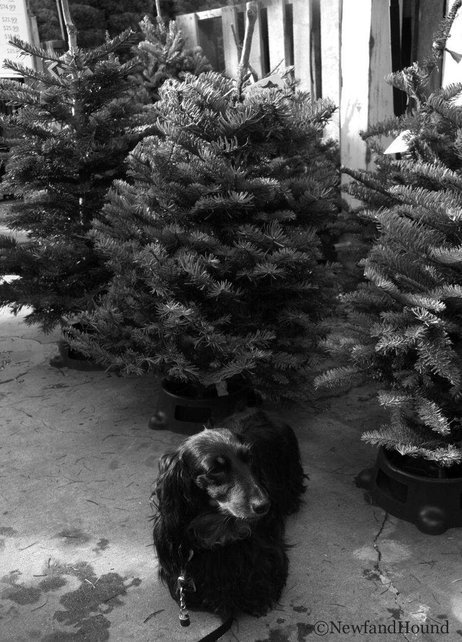 2012-12-16 Black White 19.jpg