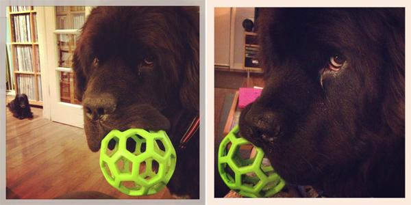 2013-02-22-Dog-Block.jpg