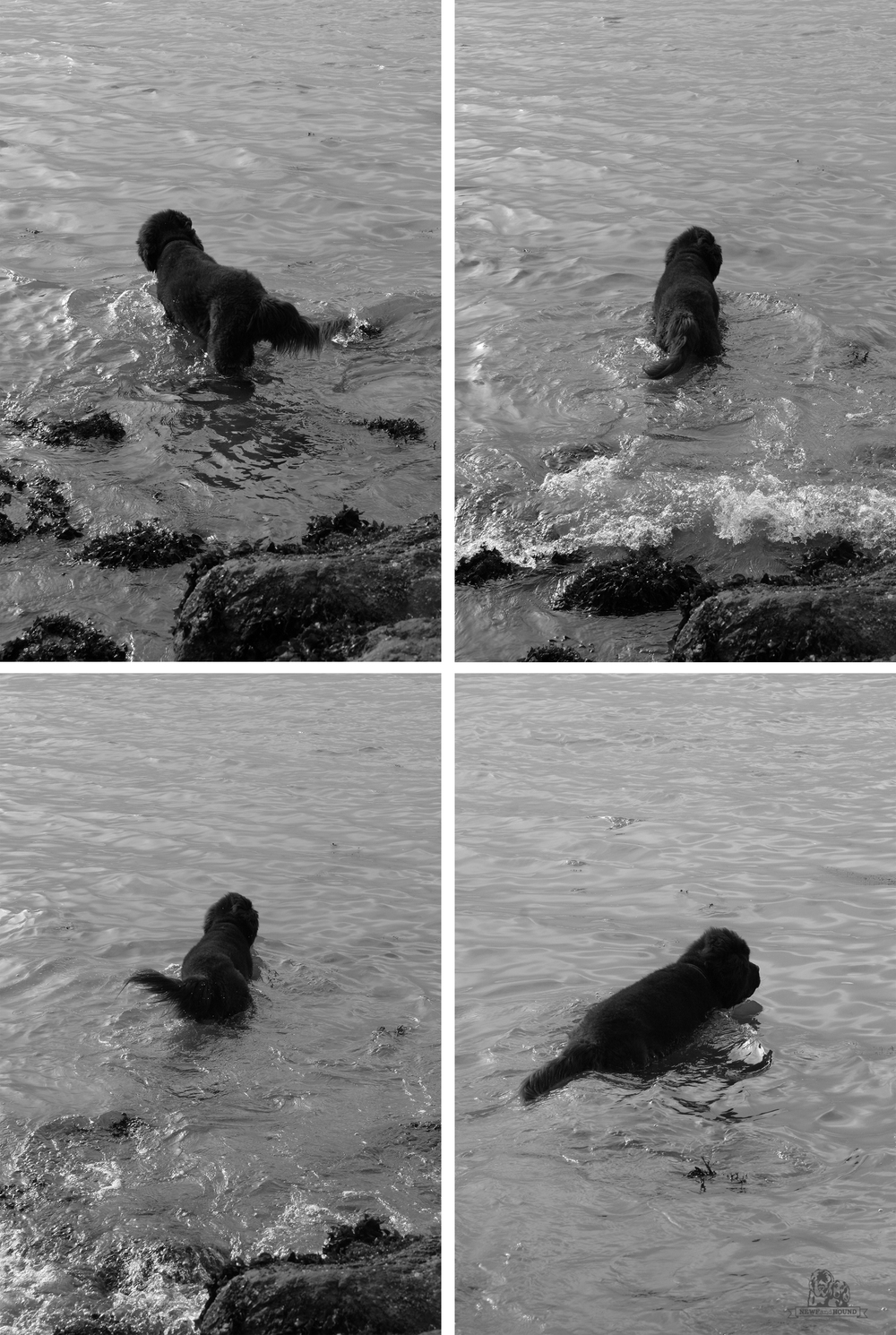 2013-06-15_Foyle_Sausalito201.jpg