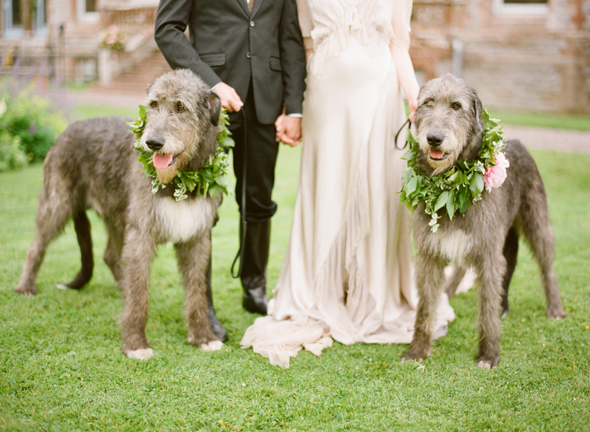 Weddings & Dogs!
