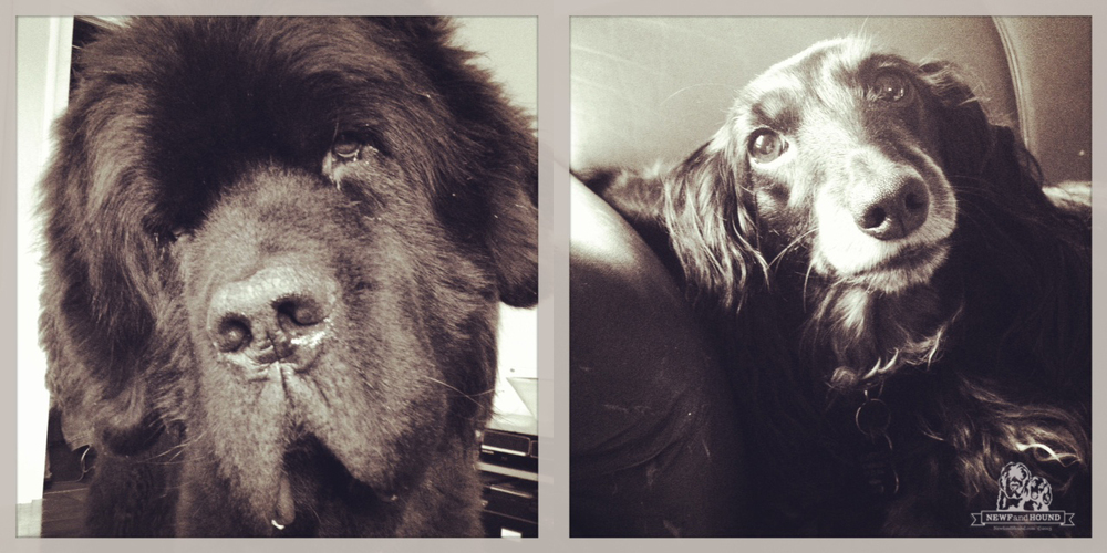 2013-07-15-Dog-Command_Nooner.jpg