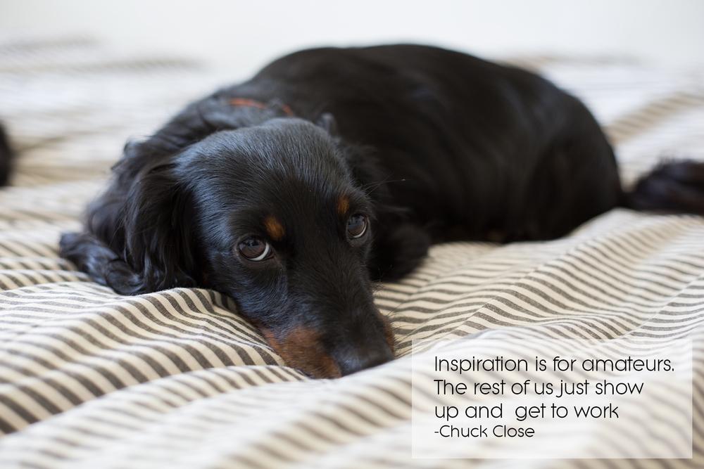 dachshund, quote, miniature dachshund, newfandhound