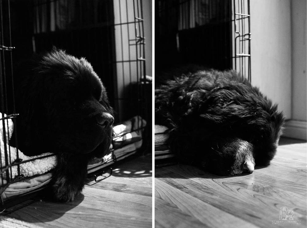 2014-01-22-Goodbye-Foyle.jpg