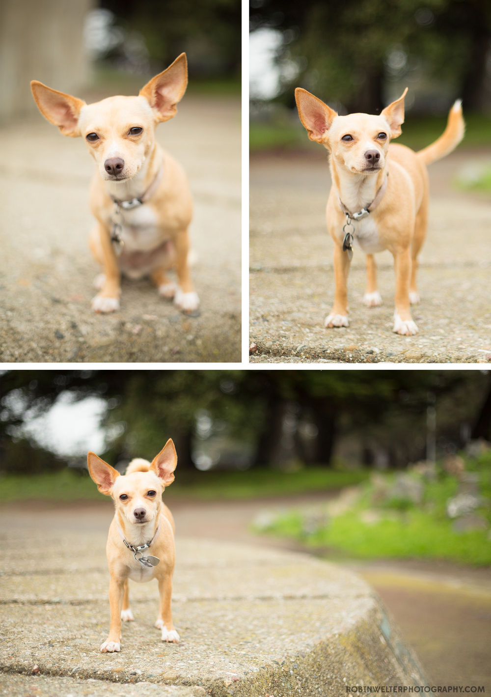 NewfandHound-Bitsy From Bekeley | Robin Welter Photography