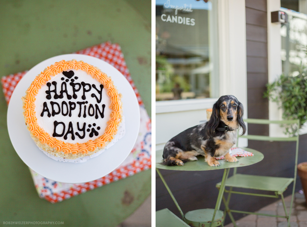 NewfandHound- Cody's Adoption Day! | Robin Welter Photography