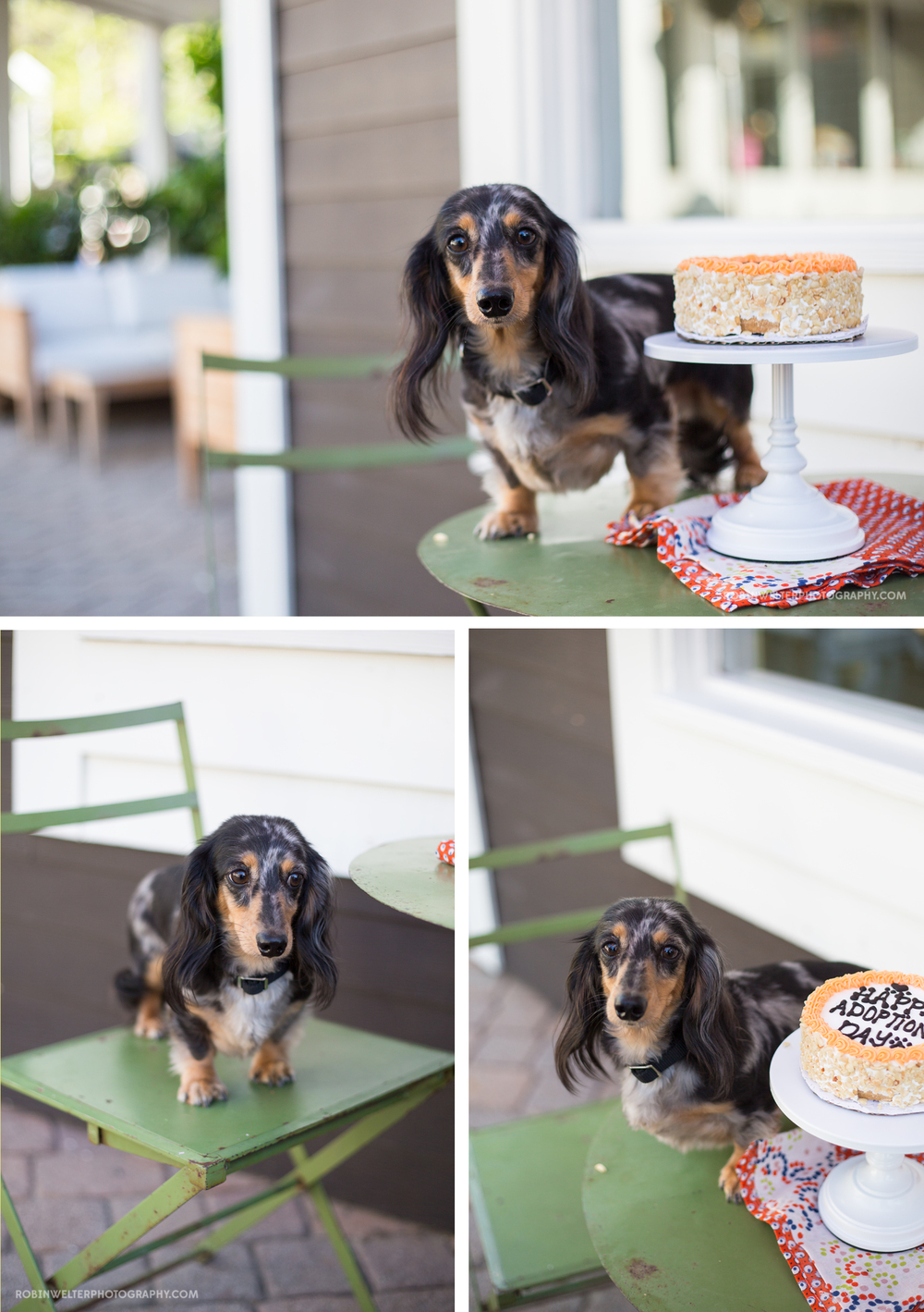 NewfandHound- Cody's Adoption Party! | Robin Welter Photography