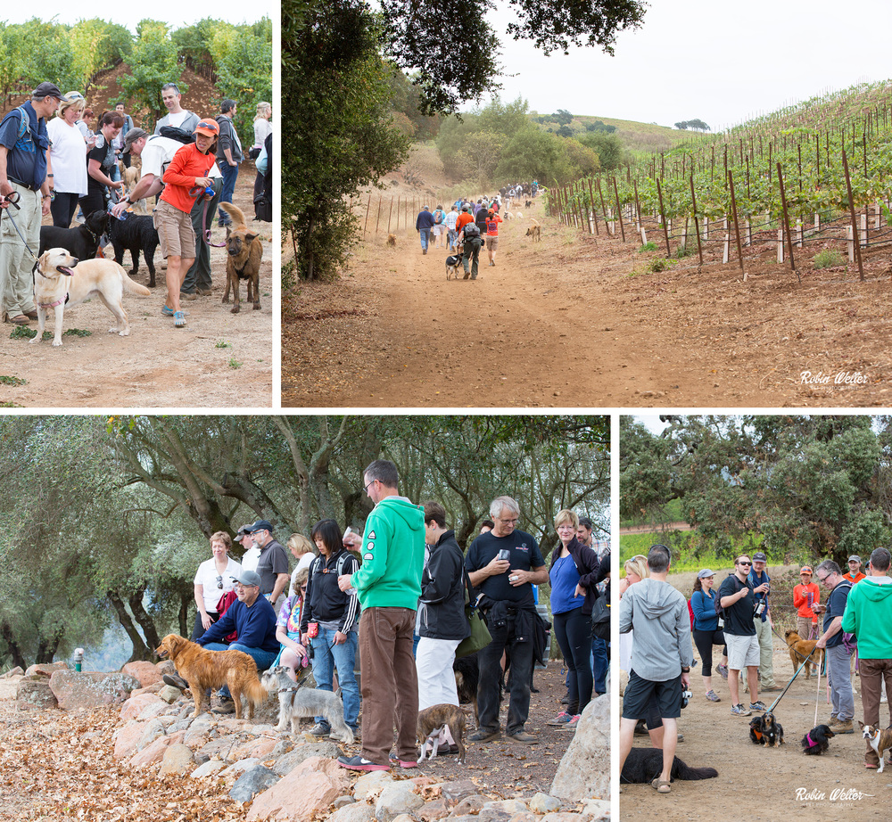 NewfandHound-Kunde Family Winery Dog Hike- Robin Welter Photography