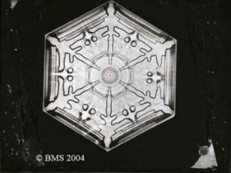 a little winter inspiration from snowflake bentley cerebella design
