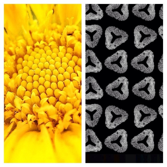 Pollen at the micro and macro levels #pollen #microscopes #biology #textiledesign