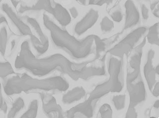 Marc_Coutanche-cortical_folds.jpg