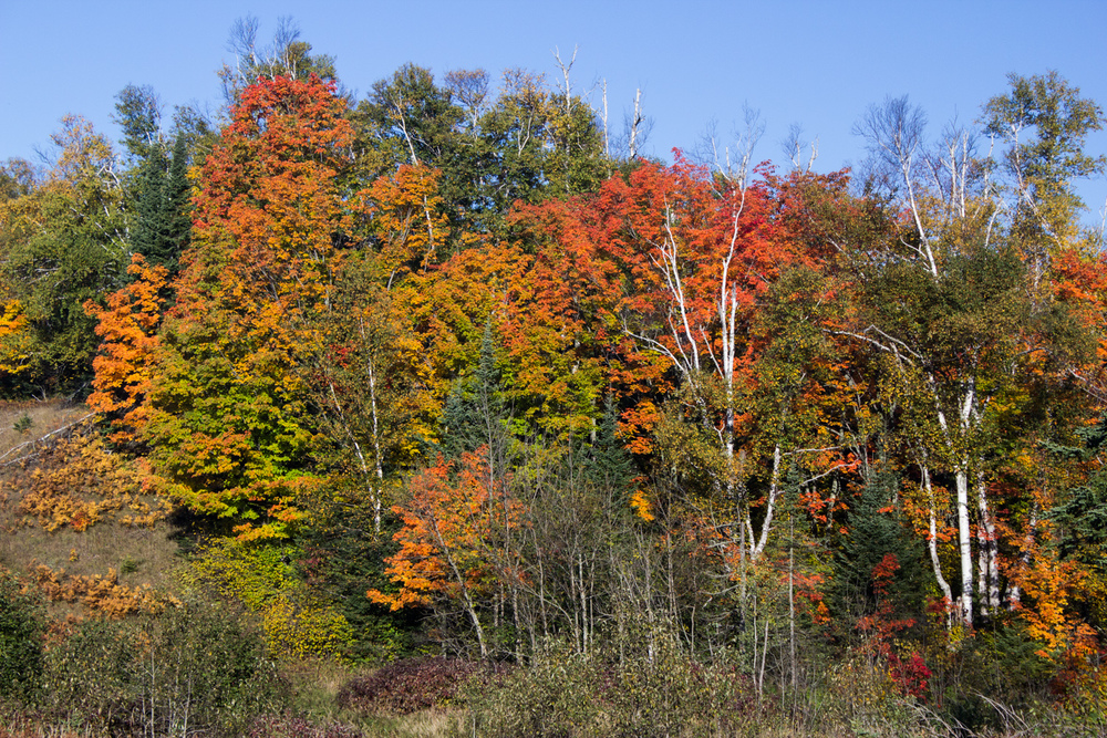 Showing the wide range of colors near Lake Superior