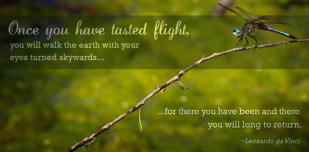 Dragonfly - K. Moritz