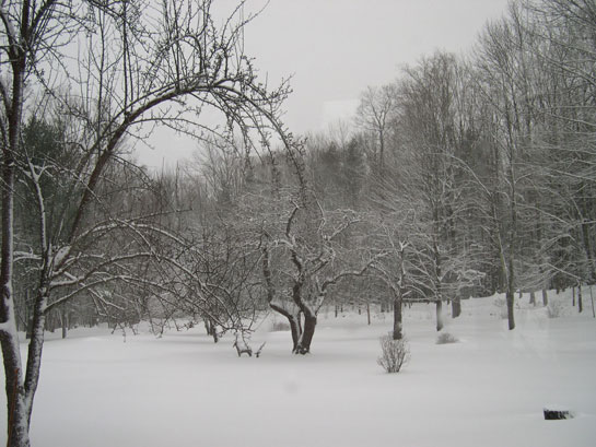 AppleOrchardInTheSnow.jpg