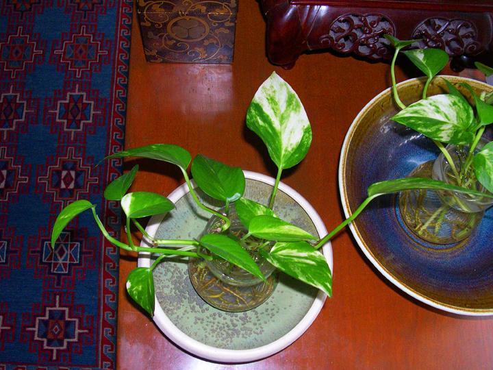 Diane's_Bowls_Cultural_Roots_web.jpg