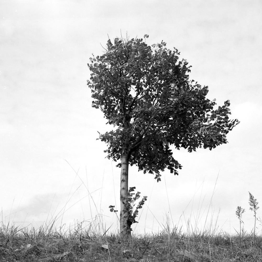 tree (3).jpg